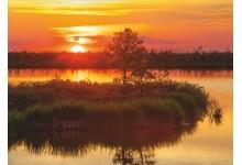 Вечер на болоте Ельня