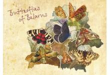 Бабочки Беларуси