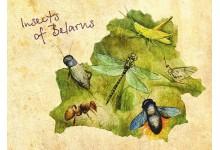 Насекомые Беларуси