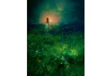Если нет звезд на небе - ищи их в травах